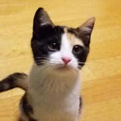 猫の里親さん探し(竹の塚里親会) サムネイル1