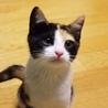 猫の里親さん探し(竹の塚里親会)
