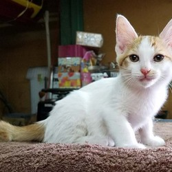 猫の里親さん探し(竹の塚里親会) サムネイル2