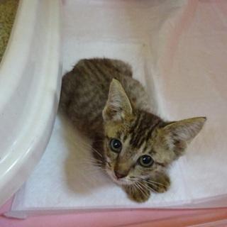 不安げな瞳をしていますが可愛い子猫です