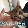 処分が決まった子猫 2匹です