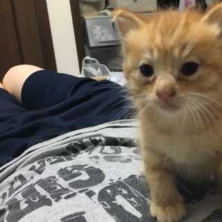保護した子猫ちゃんです