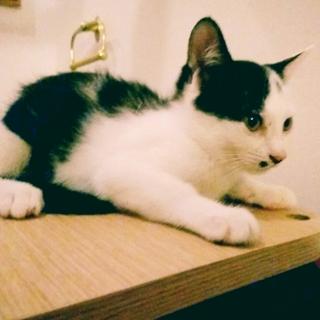 好奇心いっぱいの猫らしい仔猫です★♀ななこ(仮名)