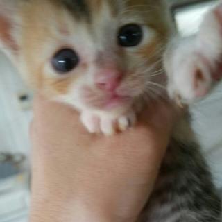 3匹の子猫★生後1ヶ月過ぎ~