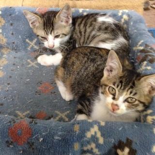 野良猫の長毛兄弟の里親さん募集中