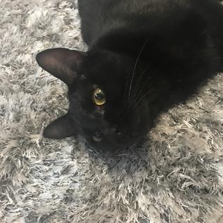 黒猫2匹!