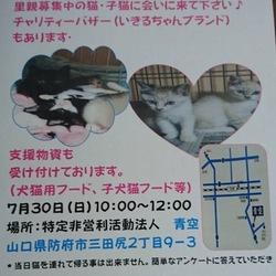青い鳥動物愛護会☆保護猫譲渡会
