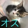 かわいい子猫3匹☆1匹からでも譲渡可です♫