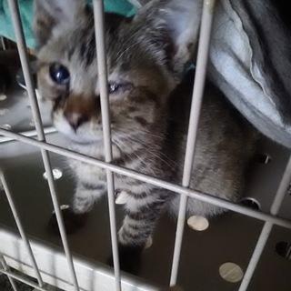 多頭現場最後の子猫、まあやちゃん