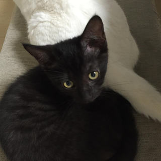 ジジみたいな黒猫の男の子
