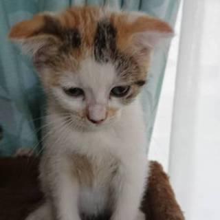 5月14日生まれの仔猫3匹の里親様募集します。