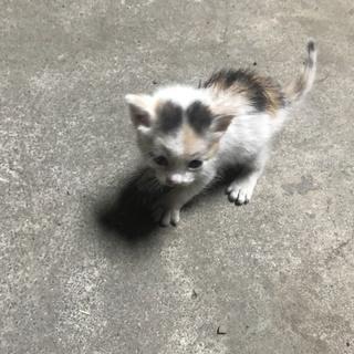 【里親募集】子猫3匹拾いました!
