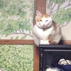 初めて飼った猫は猫ではありませんでした笑