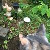 今日は特別に抱っこでお庭のお墓参りをしました。本当は逃走リスクあるのでしない方が良いです、、、