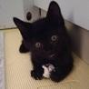 甘えん坊の黒猫くん