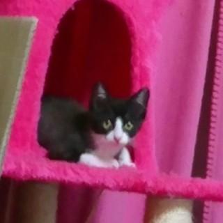 野良子猫保護してます。紫くん