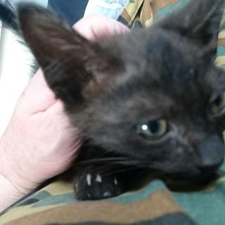 ひとなつこい黒猫の男の子
