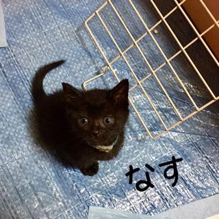 丸顔で目がくりんとした黒猫女子です。