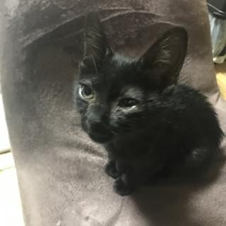 とても人懐こい黒猫です