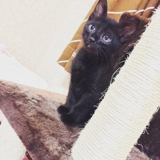黒猫♂2ヶ月ブルーアイ