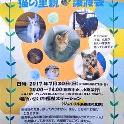 第3回}【ΦωΦ】{猫の里親譲渡会