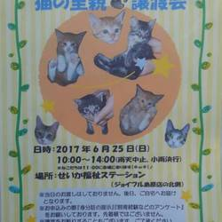 第2回}【ΦωΦ】{猫の里親譲渡会