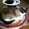 小5娘作成の、 Tシャツヤーンの猫かご用布が完成しました。