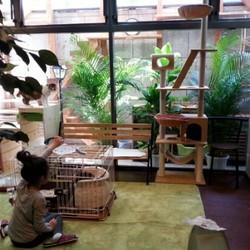 猫カフェで譲渡会7/29神戸【ニャーニャの森】