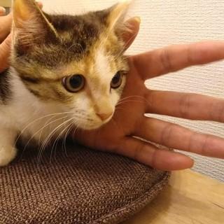 仔猫【ねむ】ちゃん