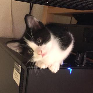 美猫ちゃん 白黒のリリちゃん!