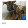助けて下さい!!3ヶ月くらいの子犬です!!