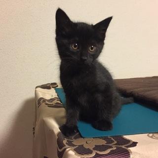 幸福を呼ぶ『黒猫のルルちゃん!』