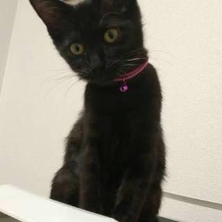 スレンダーな女の子、黒猫のミユちゃん