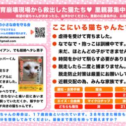 江戸川区多頭飼育崩壊した猫たちの譲渡会 サムネイル2