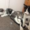 子猫ちゃん2匹