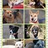 犬祭り&フリマ
