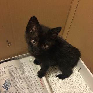 生後1ヶ月半、黒猫の男の子
