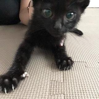生後約2ヶ月☆黒猫ちゃん