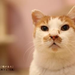 Lua猫の里親会 サムネイル1