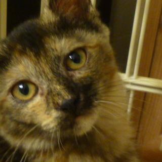 可愛いサビ子猫です!