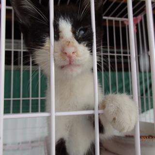 人間大好き白黒子猫ちゃん