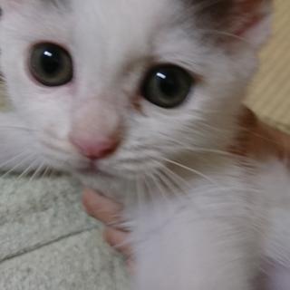 雑種の白猫ちゃんです。