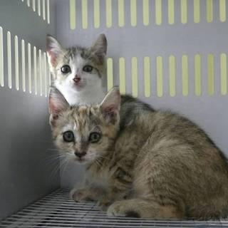 県外の方でも里親になれます!二か月の子猫三匹です