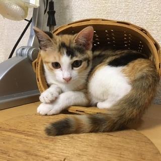 かわいい子猫 みけこちゃん
