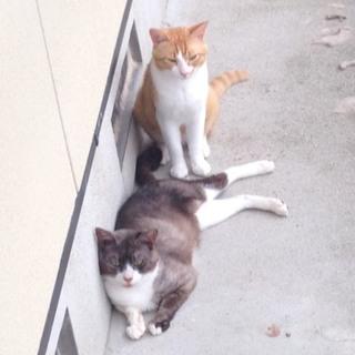 緊急!炎天下の中の多頭崩壊猫たちを助けて!