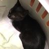 里親探しの黒猫娘