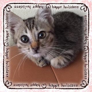 アビシニアン風模様の子猫ちゃん