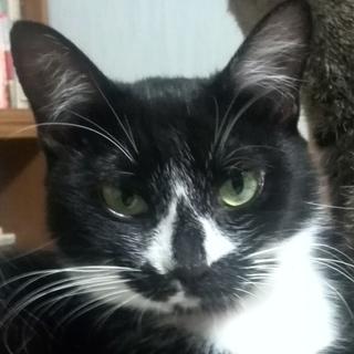チョト小さめな1歳の成猫です。