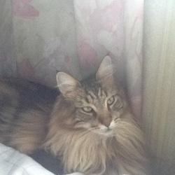 目が覚めたら猫が一直線に寝ていた!