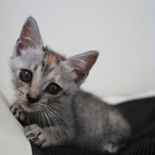 猫風邪乗り越えた!小柄のムギラワちゃん☆